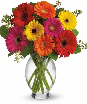 Gerber Daisy Vase - Des Moines Florist - Boesen The Florist - Des Moines, Iowa (IA)