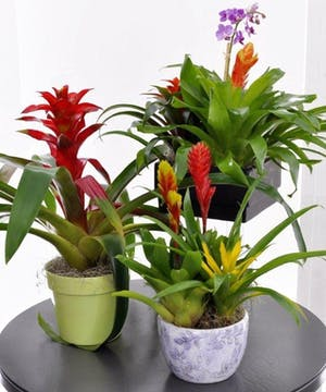 A bromeliad garden is the perfect gift for a new office or home!