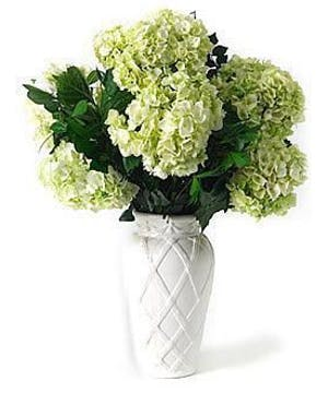 White Cut Hydrangea