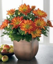 Beautiful Live plant in ceramic planter