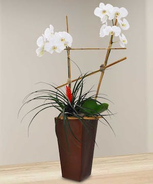 Enjoy this peaceful arrangement with white orchids and a bromeliad plant!