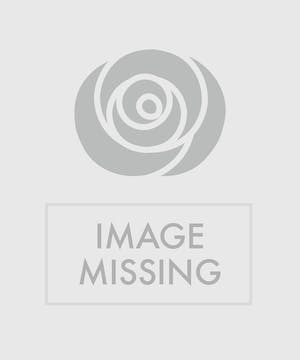 Garden basket of blooming azalea and lush green plants.