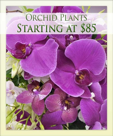 Enjoy an orchid plant with Boesen the Florist!