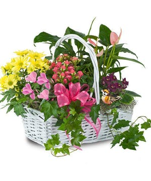 Give a blooming garden basket that will last long after the holiday to remind Mom of your love and care for her.