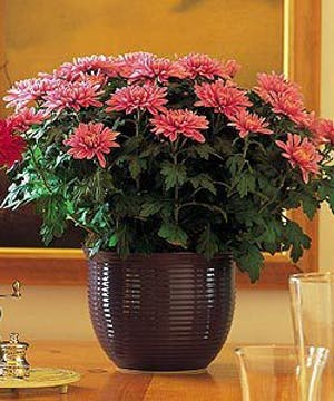 Best Value for long lasting blooms