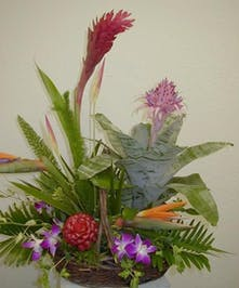 with Bromeliad Plant