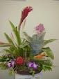 Tropical Garden w/Plant