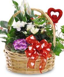 Valentine Blooming Plant Basket