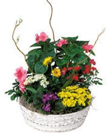 Assorted Blooming Plants