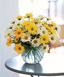 Sunny Sweetness!