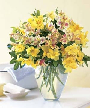 Beautiful Vased Peruvian Lilies