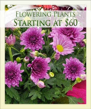 Enjoy a flowering plant from Boesen the Florist!