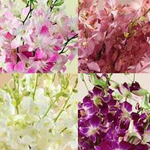 Orchids for A Year