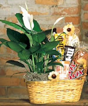 Easy to care for plant, goodies & more...