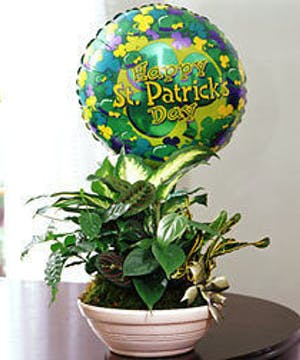 Green plants and a Happy St. Patrick's Day mylar balloon to compliment your St Patrick's Day wishes.