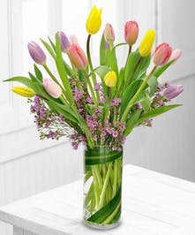 Spring Tulips- Boesen The Florist