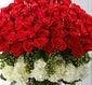 72 Roses