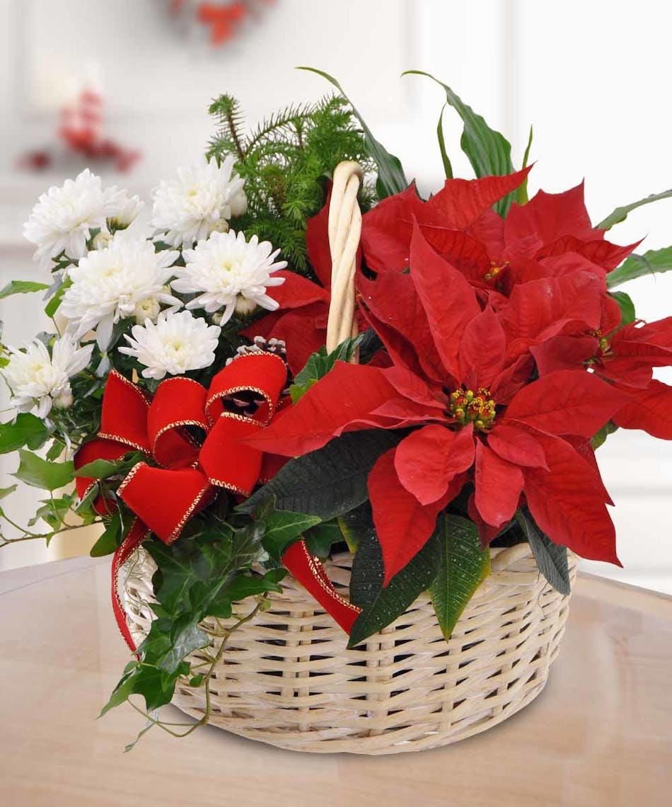 poinsettia garden basket holiday flowers and gifts boesen the