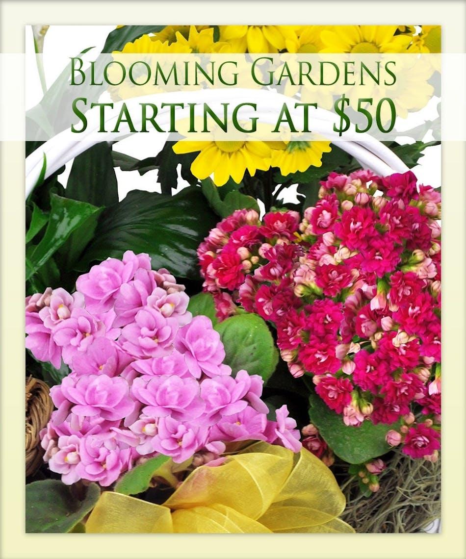 Blooming gardens designer 39 s choice boesen the florist for European motors des moines